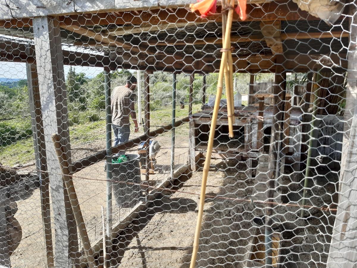 pollaio comunità rajo