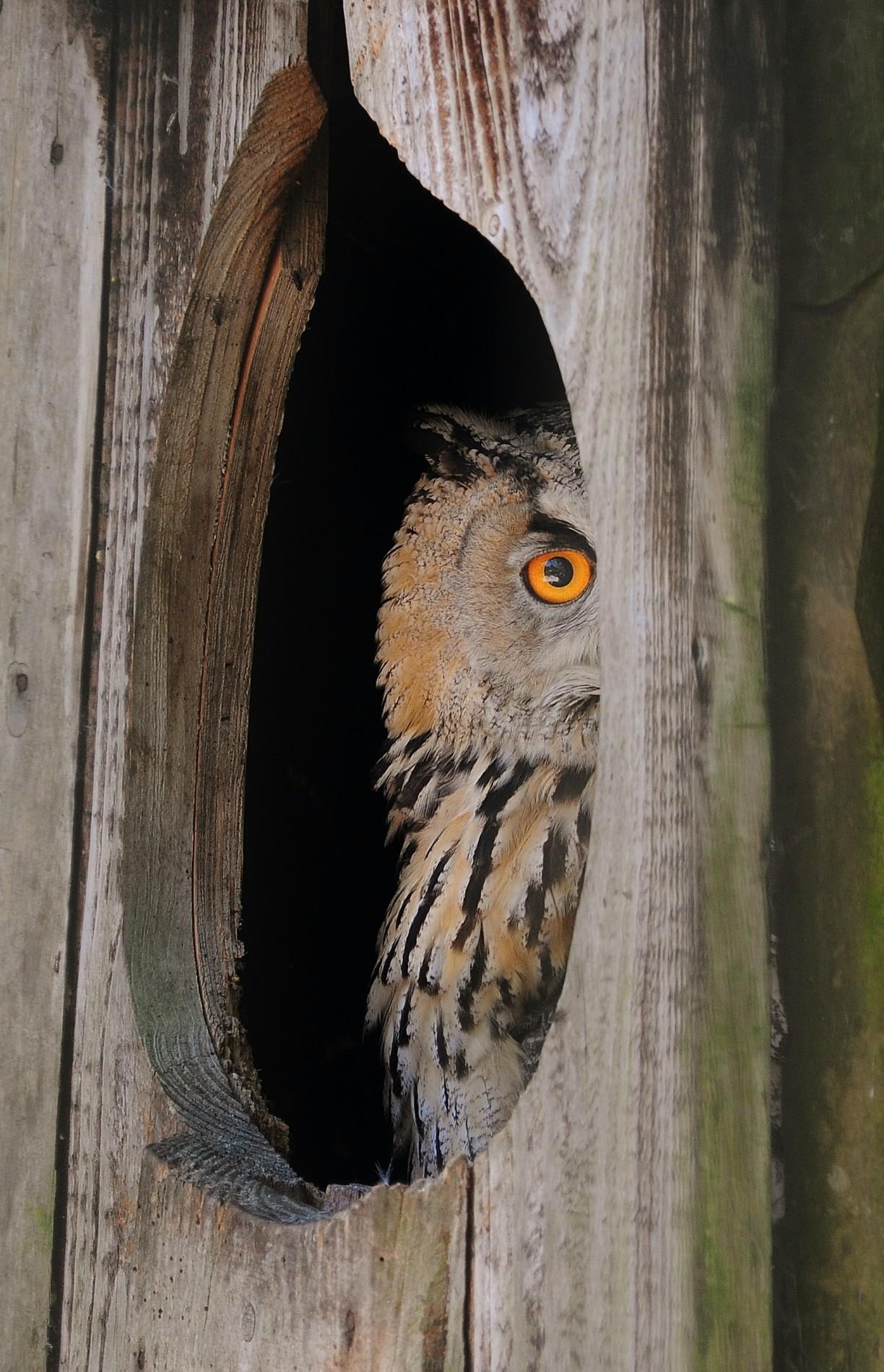 bird-animal-owl-3890